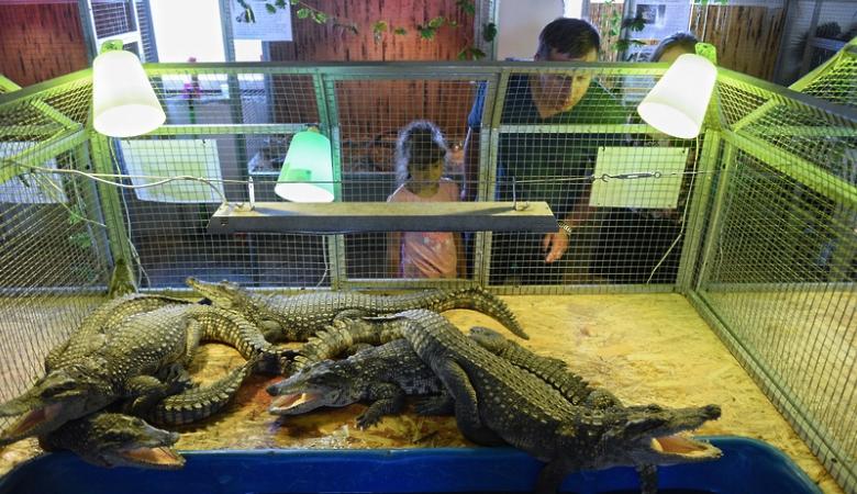 Желающие могут познакомиться с крокодилами